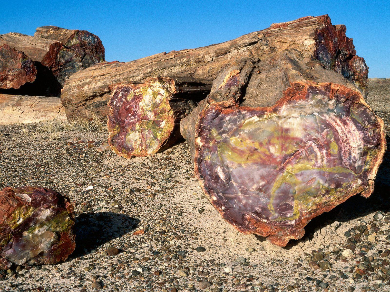 Petrified_forest_national_park,_arizona