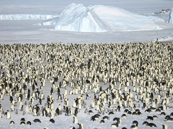 Emperorpenguins